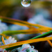 droplet by aecasey