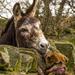 Kiss me Quick........... by shepherdmanswife