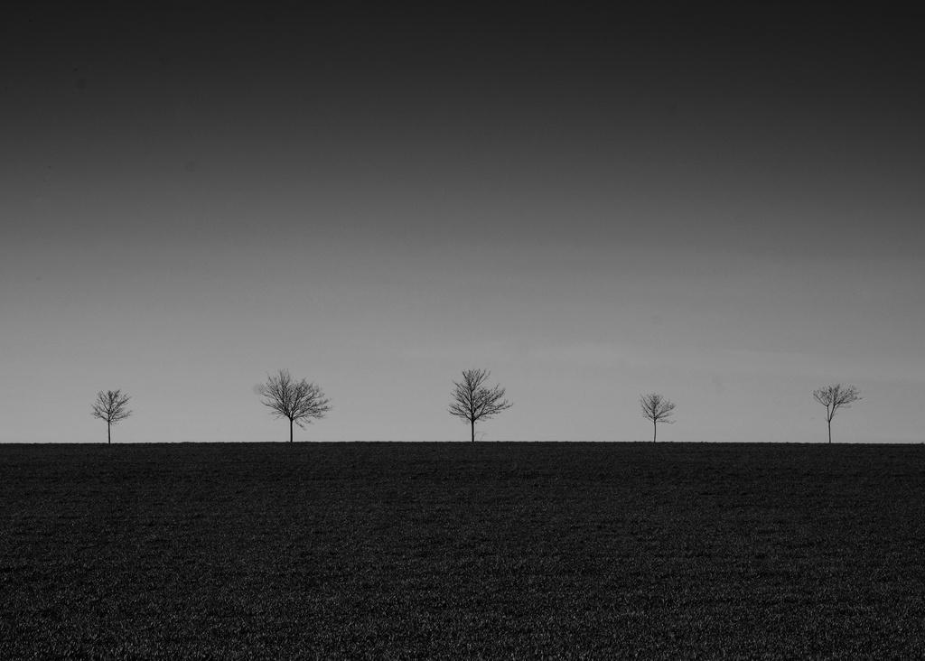 Widmerpool Trees again by seanoneill