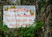 10th Mar 2014 - Dogs patrolling - 10-03