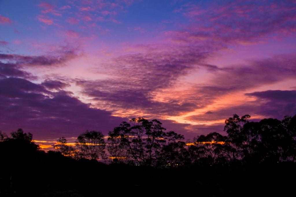 Sundown by corymbia