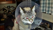 12th Mar 2014 - Poor injured kitty