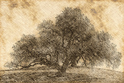 12th Mar 2014 - Trees and Textures