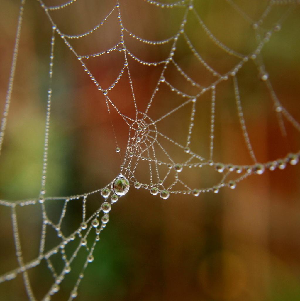 Jewelled web by busylady