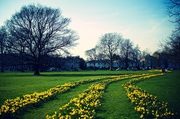 13th Mar 2014 - Day 072, Year 2 - Spring Has Sprung In Ealing