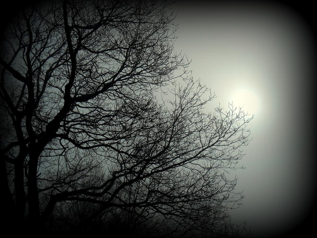 The sun breaking through the fog.....  by snowy