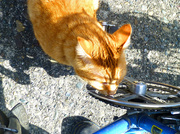 14th Mar 2014 - Cat And Bike