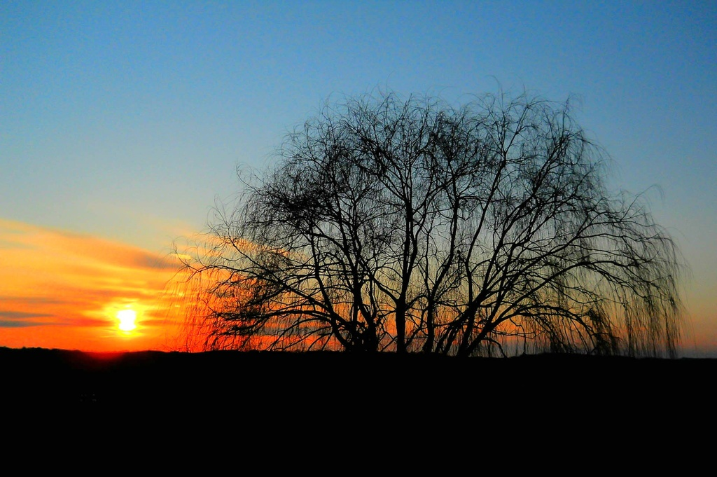 Weeping willow and the sun by mittens