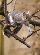 19th Mar 2014 - Coming down for the bird food......