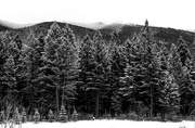 8th Mar 2014 - Columbia Mountain