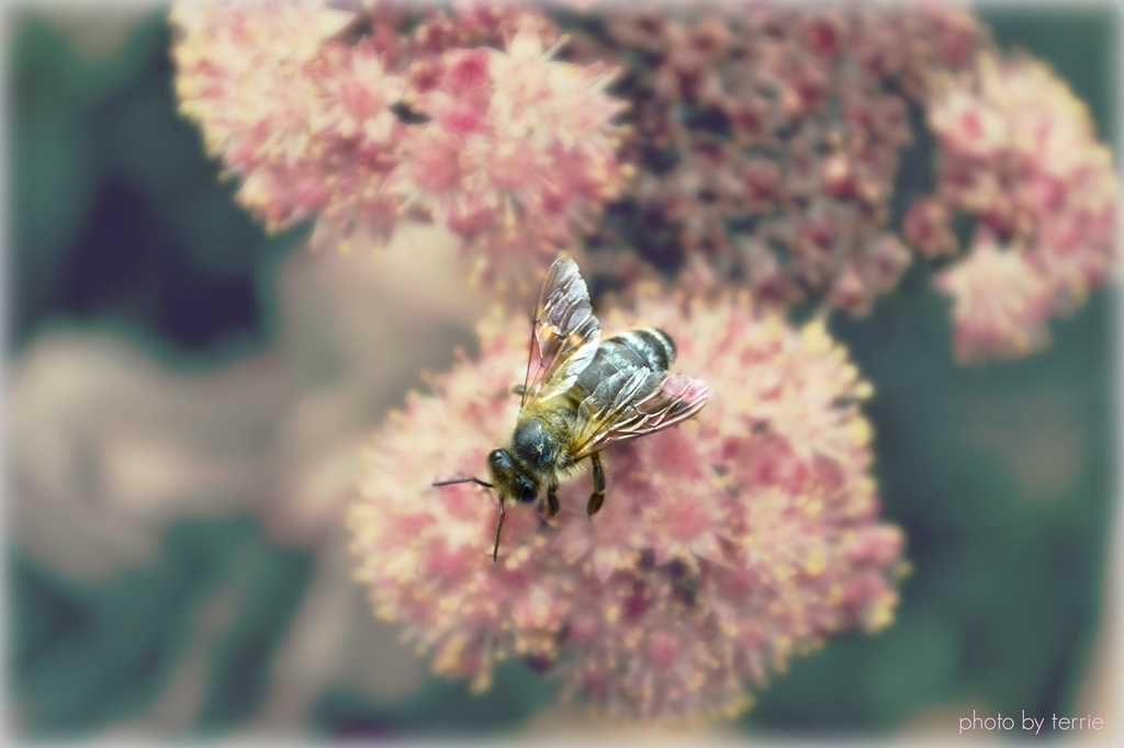 Collecting pollen by teodw