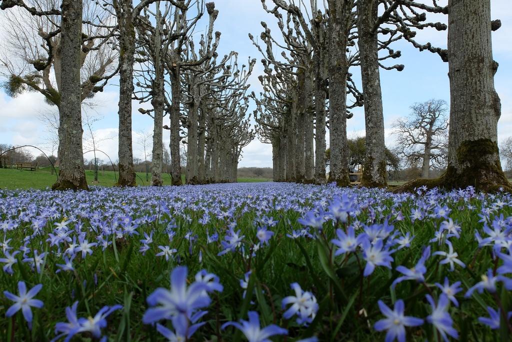 a blue carpet...... by quietpurplehaze
