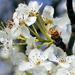 Spring lady by cjwhite