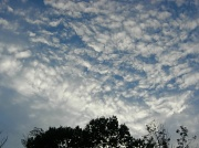 29th Sep 2010 - Fish Scales and Mare's Tails