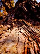 23rd Mar 2014 - Good Wood