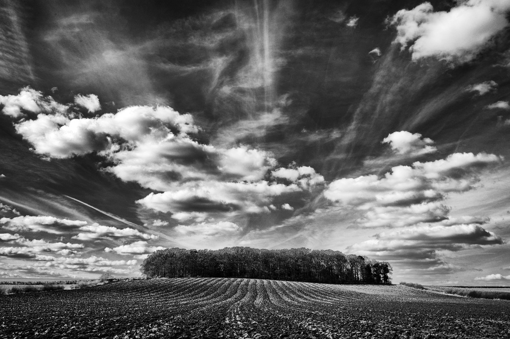 Lewes's Plantation, Stanford Hills by seanoneill