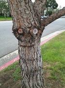24th Mar 2014 - Happy Tree