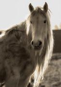 25th Mar 2014 - Horse