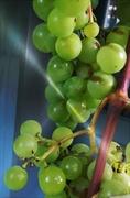 27th Mar 2014 - Green Grapes