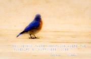 27th Mar 2014 - Bluebird of Happiness