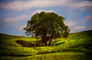 27th Mar 2014 - Trees and Hills