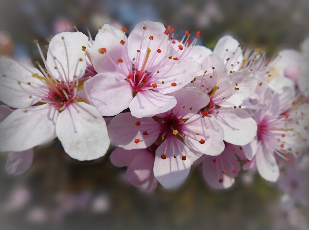 More spring blossom! by judithdeacon