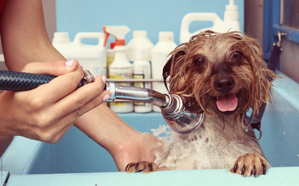 Doggy Day Spa by nicolecampbell