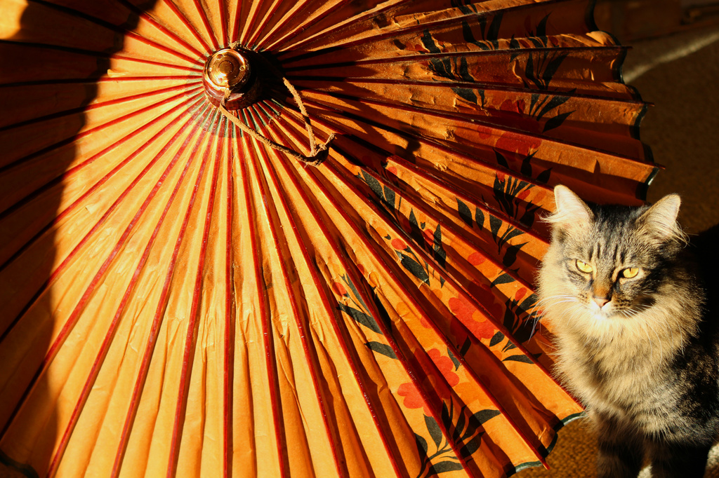 Umbrella Photobomb by nanderson
