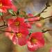 Full Bloom at Last by milaniet