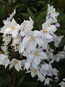 31st Mar 2014 - Nature's Bouquet
