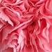 Pink Frills by motherjane