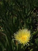 1st Apr 2014 - Sunshine