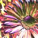 flower power by newbank