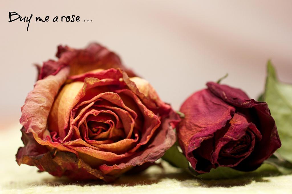 Buy Me a Rose by jamibann