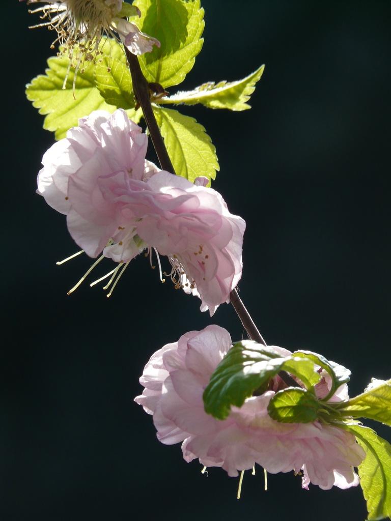 2-179 Blossom by stiggle