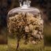 Bottled Hydrangea by shepherdmanswife