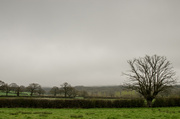 5th Apr 2014 - Over the hedge april - 5-04