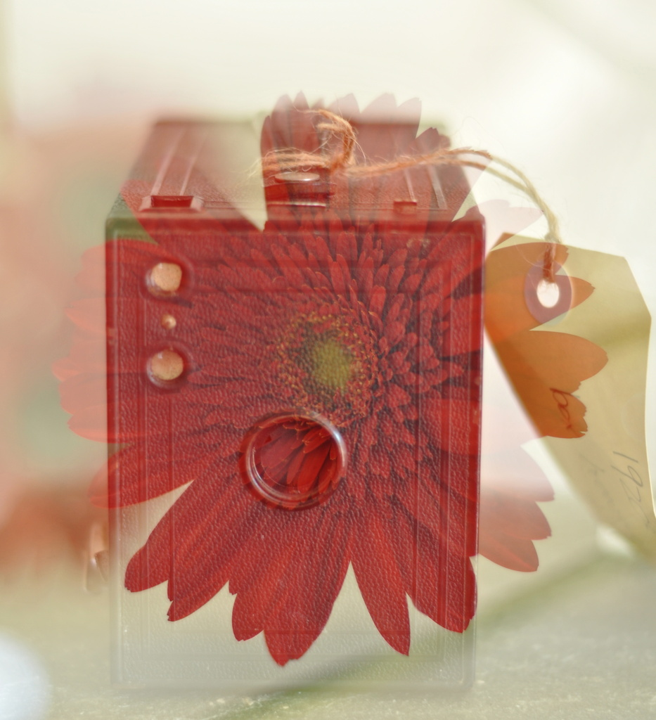 Box brownie and gerbera  by brigette