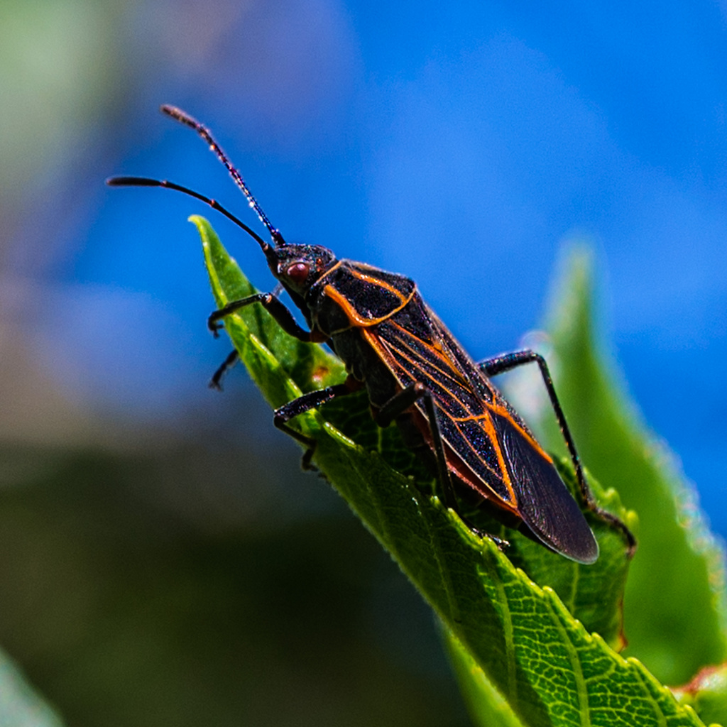 Bugs are coming! by mikegifford