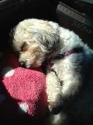 6th Apr 2014 - Sleeping Sweetness