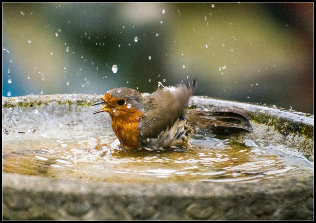 Bath time by rosiekind