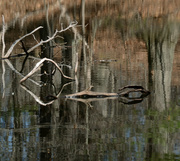 7th Apr 2014 - pond reflection