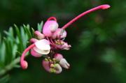 10th Apr 2014 - flower