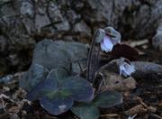 9th Apr 2014 - unknown flower