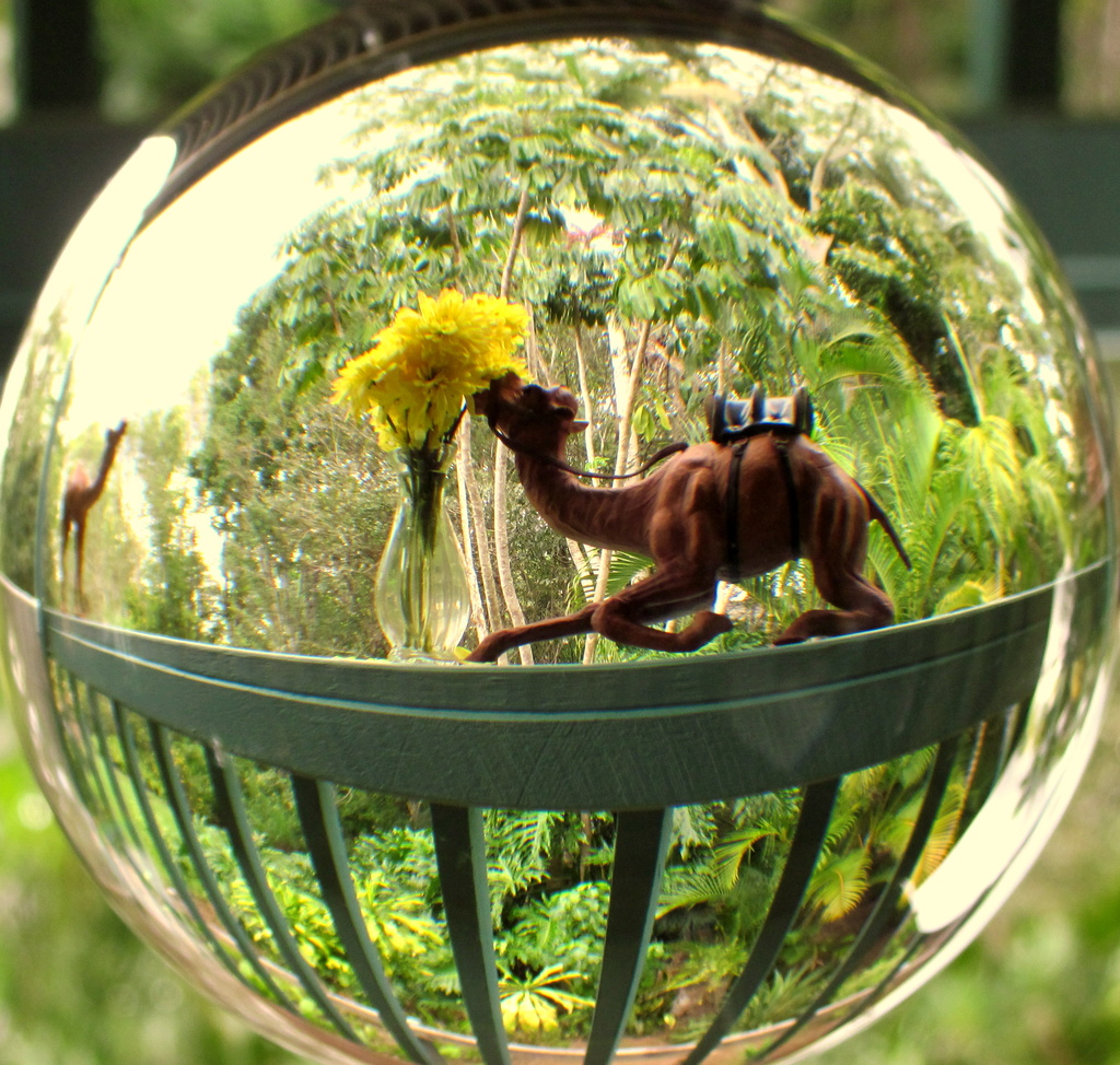 Camels in a glass ball by 777margo