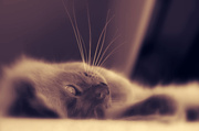 10th Apr 2014 - Whiskers