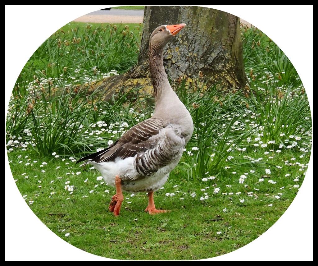 Goose witth attitude by rosiekind