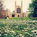 Daisylicious by judithg