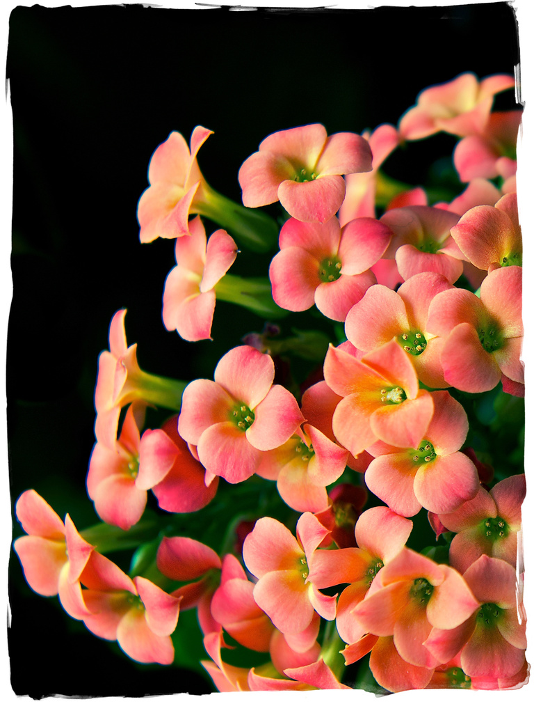 Flowers for Paul by kwind
