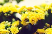 11th Apr 2014 - My calandiva plant
